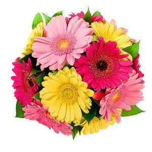 Цветы герберы фото букеты