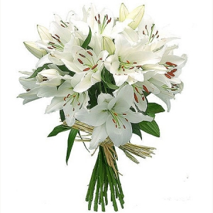 Сколько стоит лилия цветок