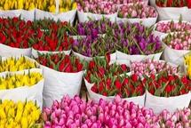 Свежие цветы оптом в Липецке от отечественных и импортных поставщиков