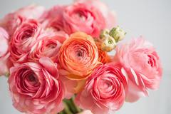 """Цветы в г. Липецк по выгодным ценам и с доставкой на дом от салона-магазина """"Цветы Эль"""""""