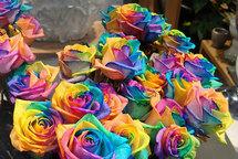 Выведены самые дорогие розы