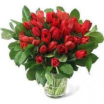 Продажа тюльпанов к 8 марта оптом в Липецке